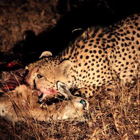 NIGHT CATCH ! by Kedar Banerjee - Novices Only Wildlife