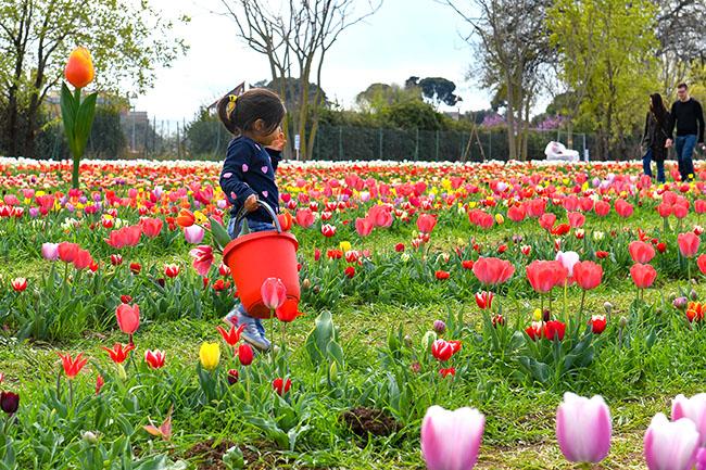 Mare di Tulipani  di Riccardo Fabi