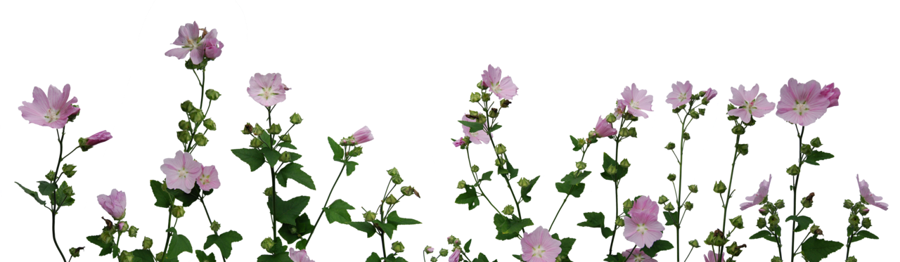 احدث ملحقات الفوتوشوب 2019 زهور