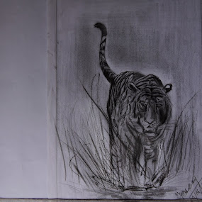 PENCIL ART BY MI .......TIGER ...... 28/04/2015 by Vaibhav Chavan - Drawing All Drawing