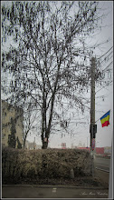 Photo: Glădița, plătica (Gleditsia triacanthos) - de pe Calea Victoriei, Mr.3 - 2017.02.17
