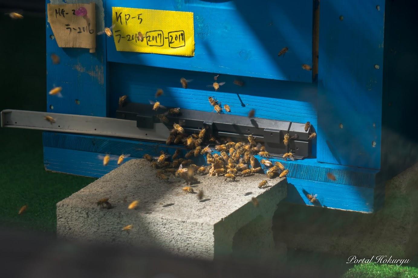 入り口で門番をするミツバチ