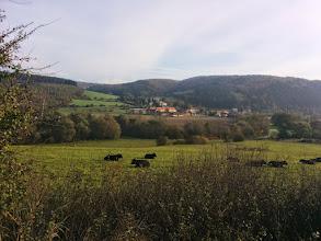 Photo: Morgendliche Gassirunde beim Kloster Mayerling....