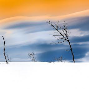 White desert by Fredrik A. Kaada - Landscapes Travel ( orange, colorful, simple, colors, beautiful, white, fine art, image, landscape, digital, contrast, sky, tree, nature, blue, snow, dramatic, artistic, trees, best, light )