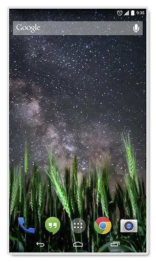 Night in a Field Live Wallpap