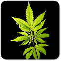 Best Weed Wallpapers icon