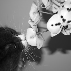 by Joelle McGraw - Animals - Cats Playing ( playing, kitten, cat, black and white, orchids, flowers, portrait )