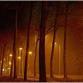 Orange Mist by Fred Starkey - City,  Street & Park  Street Scenes ( street veiw mist sodium lamp trees, , night, lights )