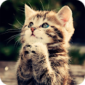 Cute Kitten Wallpaper icon