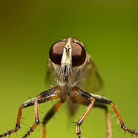 eyes by Shajin Nambiar - Animals Insects & Spiders