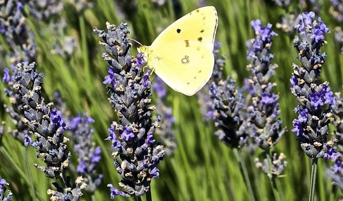 La leggerezza di una farfalla di vittorio