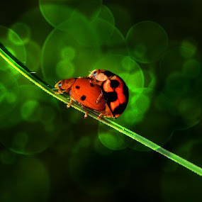 by Muhamad Firman - Animals Insects & Spiders