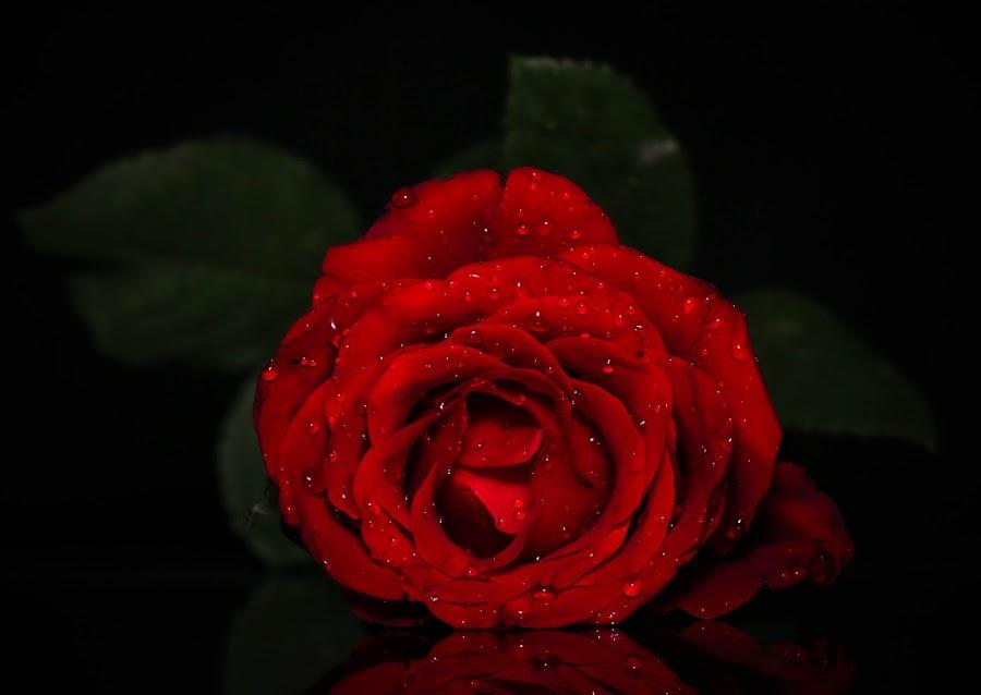 Red by Isvan Pramono - Nature Up Close Flowers - 2011-2013