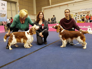 Photo: Sabrina Jankina zahrada – Middle East European Veteran Winner and Best in Breed. Aristo Jankina zahrada – CAC CACIB BOS. Bundessieger Tulln 2016