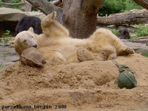 Photo: Knut raekelt sich erst noch ein wenig ;-)