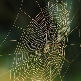 Light Web by Greg Van Dugteren - Nature Up Close Webs