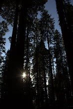 Photo: In the Giant Forest