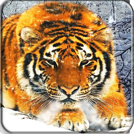 Картинки анимация тигры, поздравление мужчины юбилеем