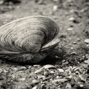 cemetery of shells by Jarka Vojtaššáková - Black & White Objects & Still Life ( shell, macro, beach, black&white )