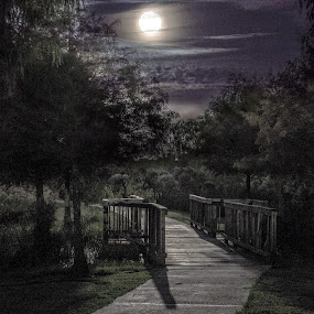 by Anatoliy Kosterev - City,  Street & Park  City Parks ( moon, park, night )
