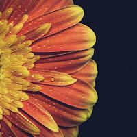 vintage flower di