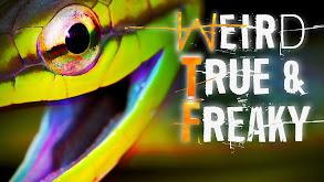 Weird, True & Freaky thumbnail