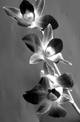 Orchids di wr_d