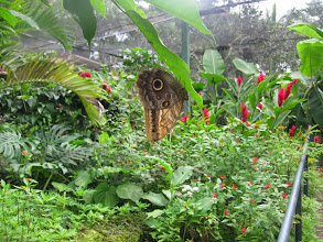 Photo: The Butterfly Farm.