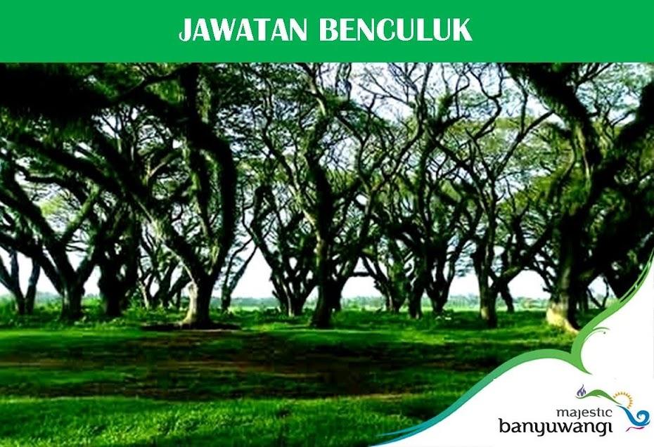 Hutan Jawatan Benculuk - www.kampungosing.com