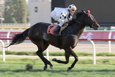 Black Code (Lookin At Lucky) se queda con Handicap (1000m-Pasto-VSC).
