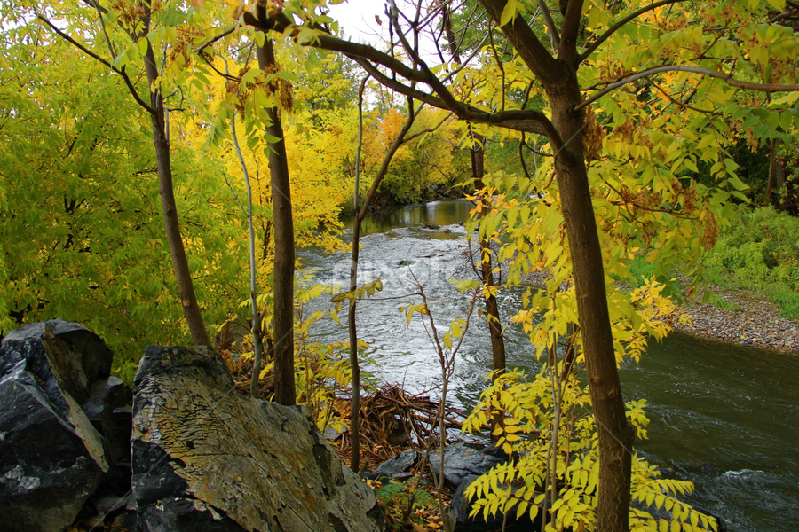Fall Along the River by Dennis Robertson - Nature Up Close Trees & Bushes ( trees, yellow leaves, river )
