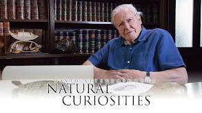 David Attenborough's Natural Curiosities thumbnail