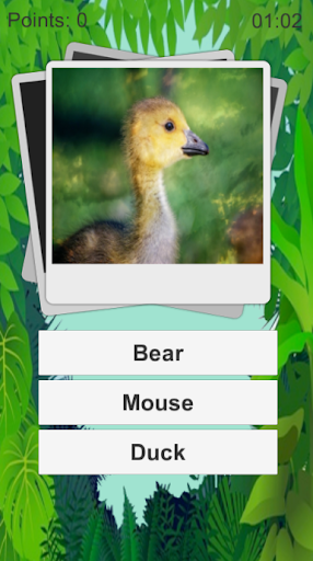 Animal Quiz Kids