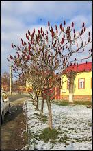 Photo: Turda - Str. Salinelor - spatiu verde  - 2018.12.13