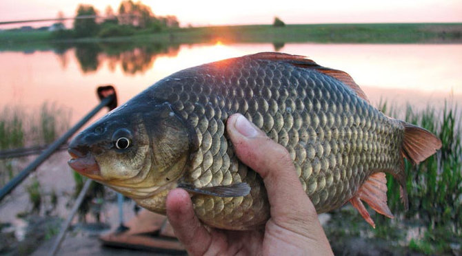 Рыбалка на карася на Днепре