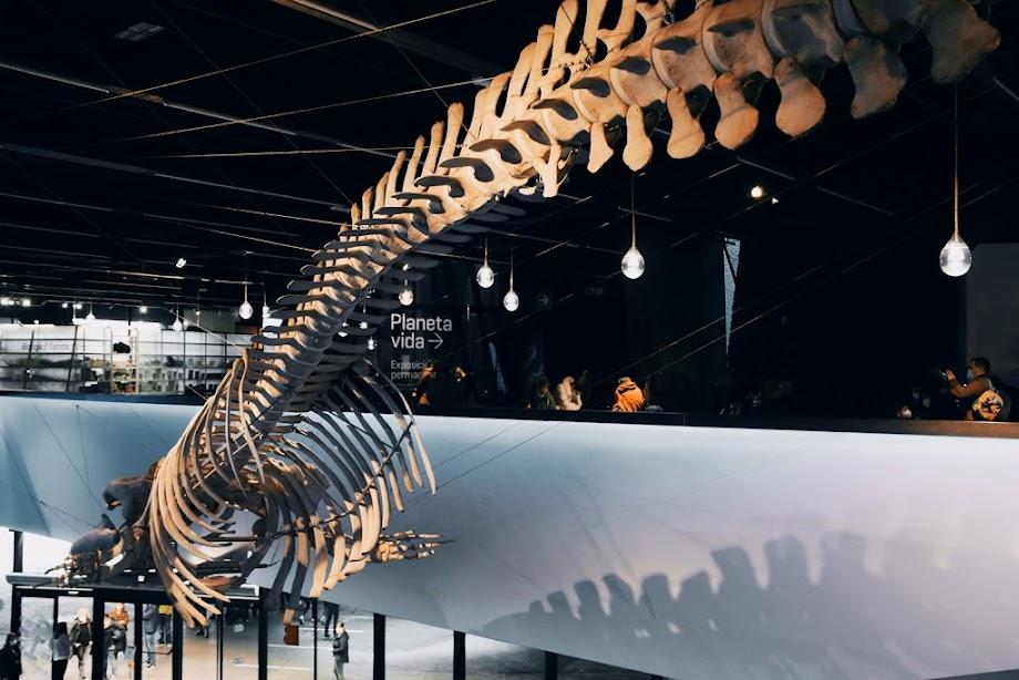 Foto Museu de Ciències Naturals de Barcelona 14