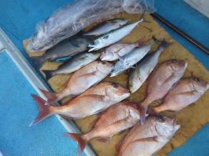 """Photo: """"タカオさん""""の釣果です。 真鯛、イサキ、クチブトにメダイ・・・でしたー!"""