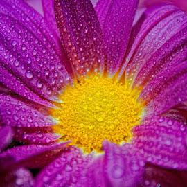 by Dragan Milovanovic - Flowers Single Flower