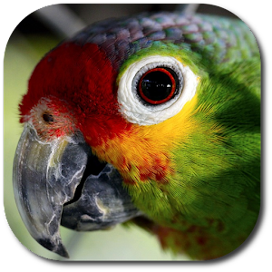 Parrot Voice: Repeating Parrot
