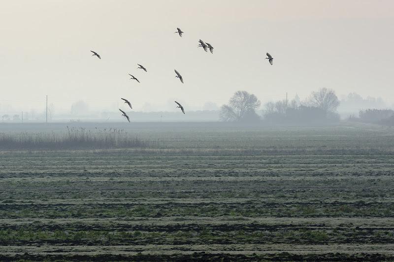 In volo sulla pianura di gabrielecollini