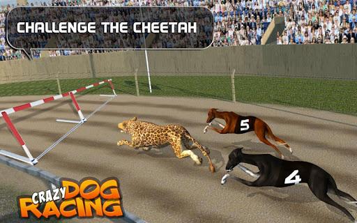 Crazy Dog Racing  {cheat|hack|gameplay|apk mod|resources generator} 3