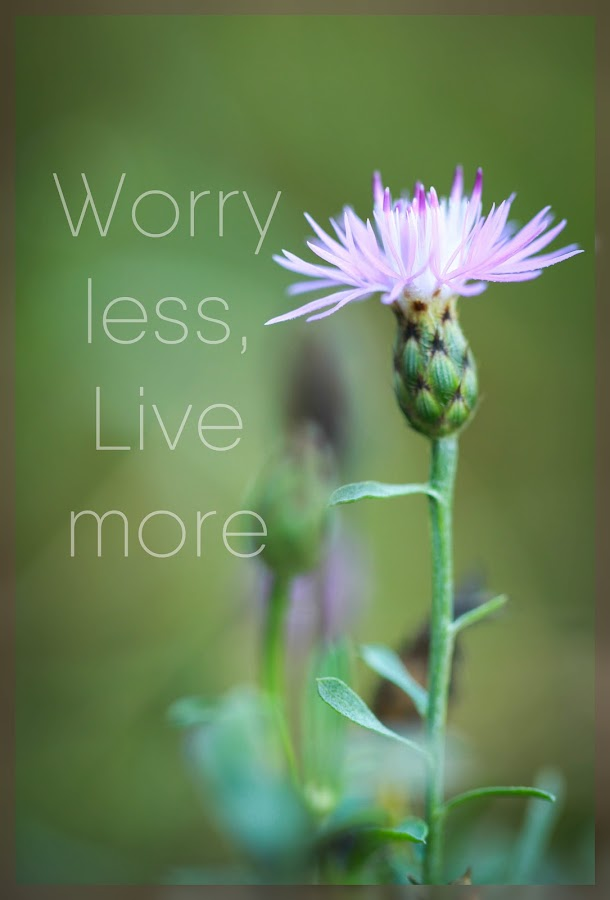 Live not Worry by Tammy Drombolis - Typography Captioned Photos ( serenity, quote, green, peace, knapweed, flower,  )