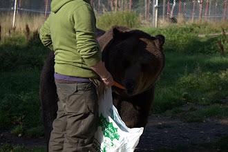 Photo: Brown bear at the zoo - a friendly bear