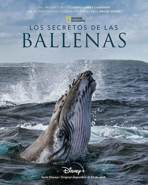 Los secretos de las ballenas