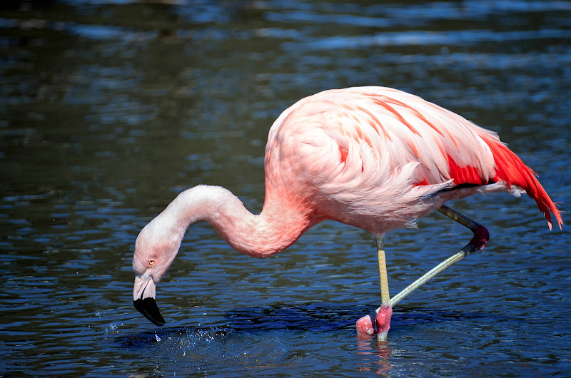 Pink bird di Diana Cimino Cocco