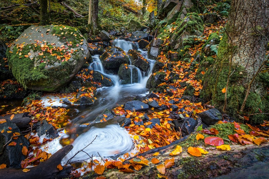 Tiny Waterfall by Jocke Mårtensson - Landscapes Waterscapes ( canon, water, leafs, autumn, waterfall,  )