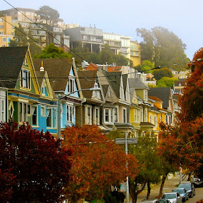 Colours of San Francisco by Abi Gilson - City,  Street & Park  Street Scenes ( houses, california, colors, street, trees, summer, travel, san francisco )