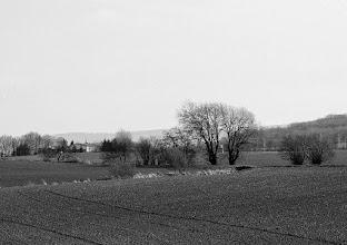 Photo: double, double,double  #Tree  #Trees  #farmland  #simple  #blackandwhite