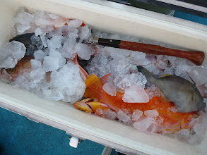 Photo: イノウエさんも・・・サメに。 次は夜釣りですな。