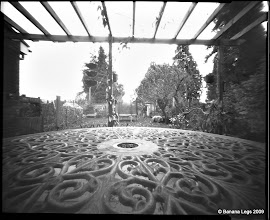 "Photo: Garden from Patio. 5""x4"" flat paper negative, 55mm focal length"
